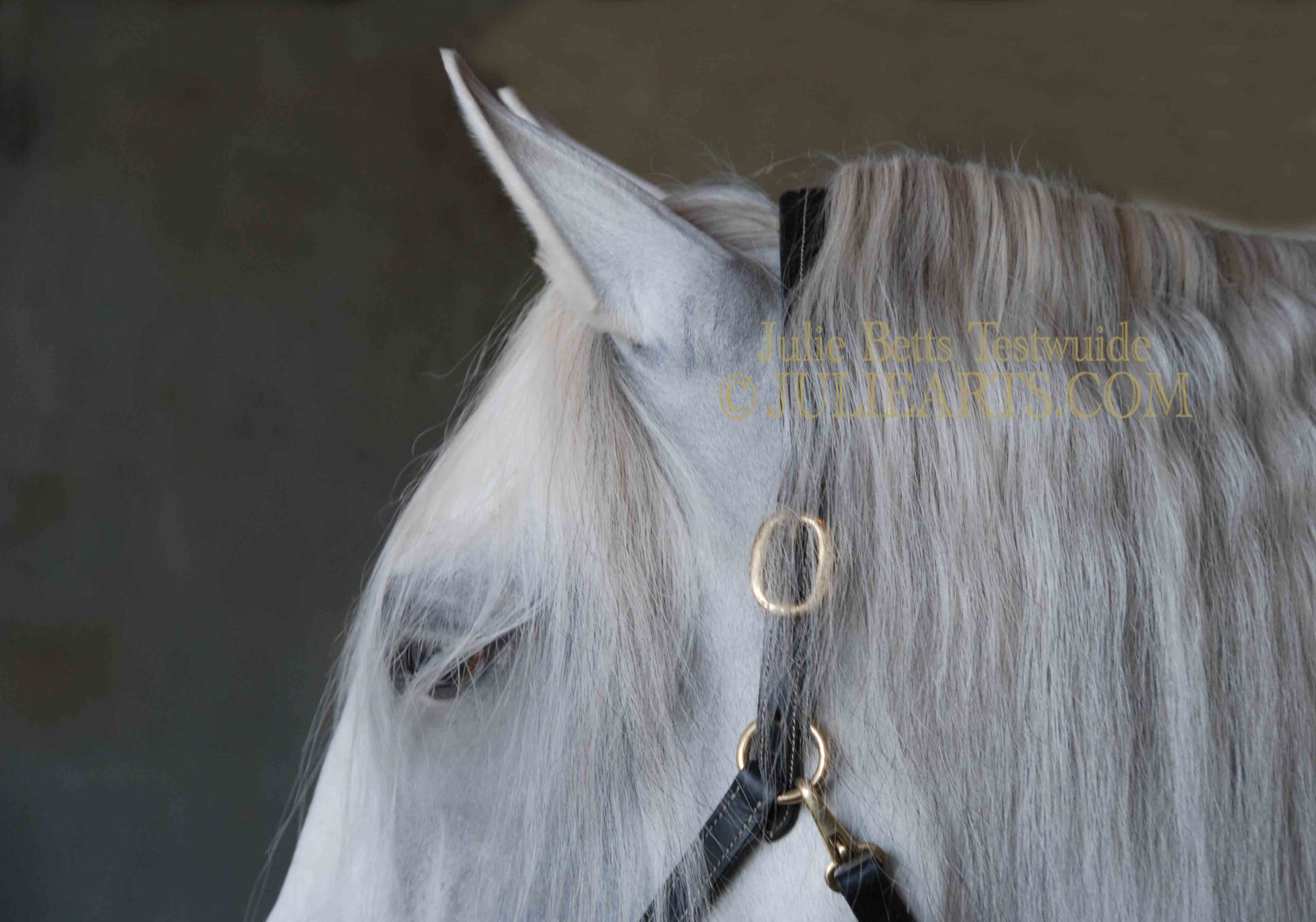 A White Horse in Bridle